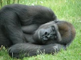 質の高い睡眠を考える ~睡眠専門医、睡眠指導士を呼んで~
